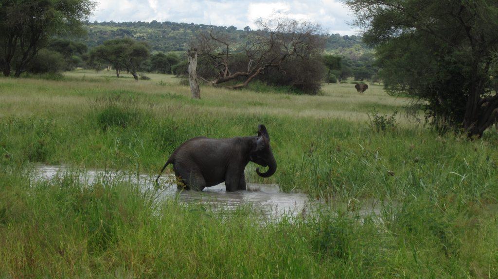 Le bain de l'éléphant, Tanzanie